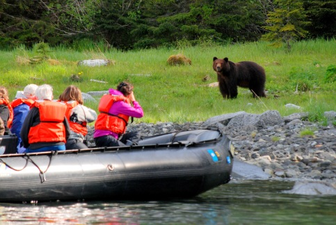 bear encounter in Alaska