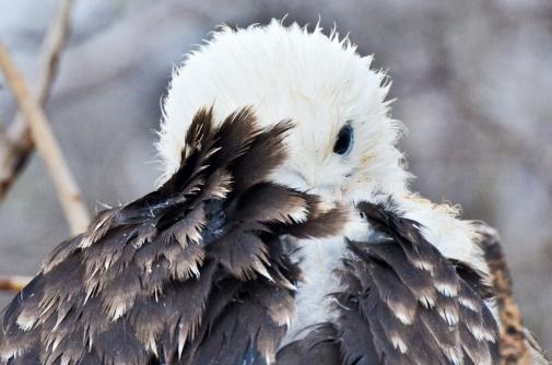 galapagos animals wildlife