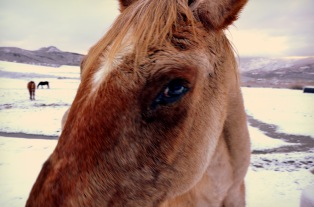 Aspen Horse Close