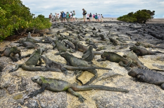 Fernandina Island, Galapagos
