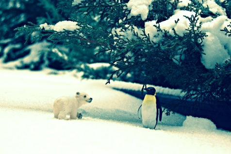 A Polar Bear and Penguin in the Brooklyn Wild