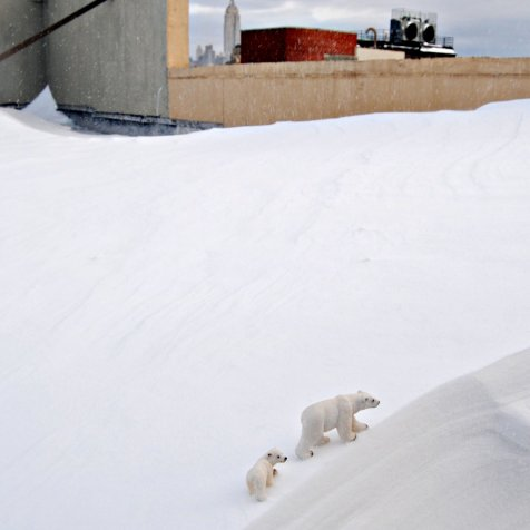 Polar Bears Brave the NYC Rooftop Snow