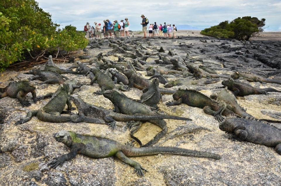 galapagos iguanas fernandina island, outdoors, travel photos, islands, animal photography
