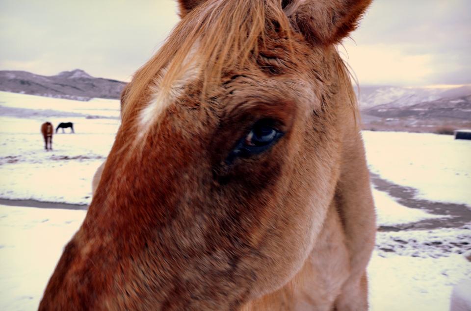 Aspen Winter Snow Horse